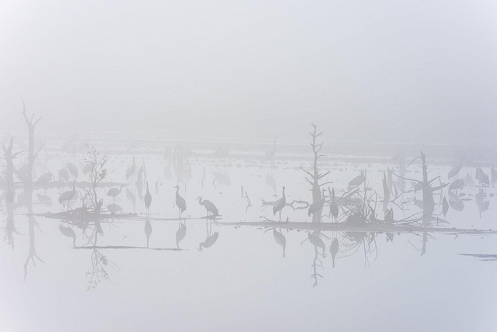 Tister Bauernmoor, Sittensen